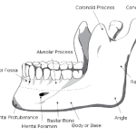 Treating mandibular strains  can have profound effects throughout the rest of the body.